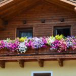 balkonove kvetiny