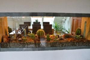 Kaktusové akvárium | Rozkvetlý domov Žďár nad Sázavou