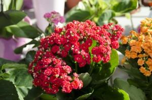 Pokojové květiny | Foto: Magda Lebišová