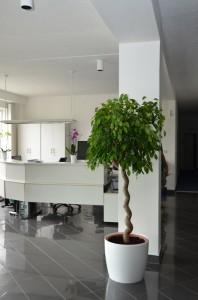 Květinové výzdoby | Rozkvetlý domov Žďár nad Sázavou